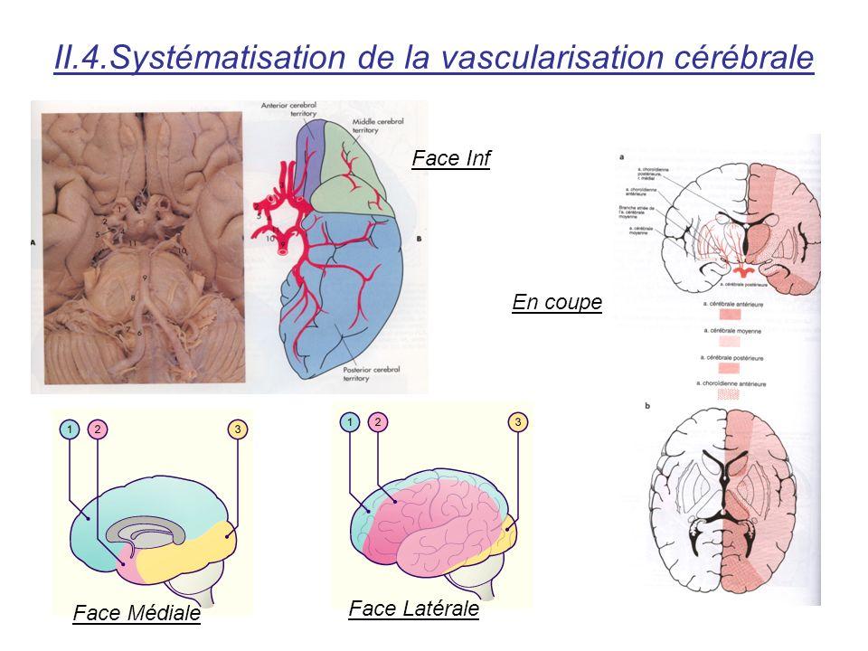II.4.Systématisation de la vascularisation cérébrale