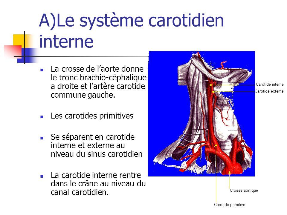 A)Le système carotidien interne