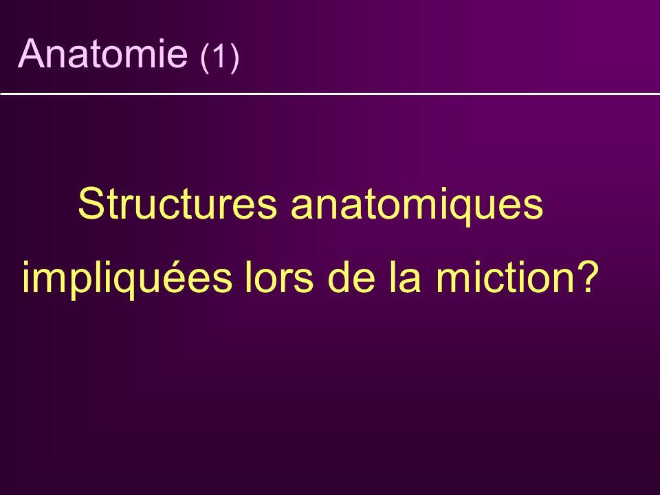 Structures anatomiques impliquées lors de la miction