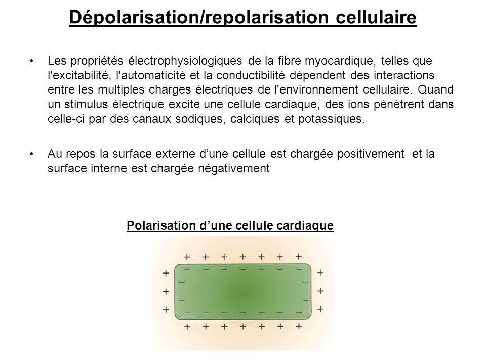 Dépolarisation/repolarisation cellulaire
