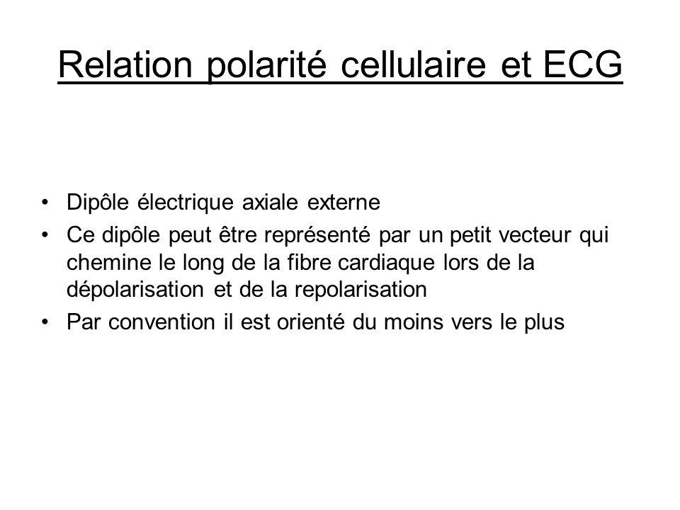Relation polarité cellulaire et ECG