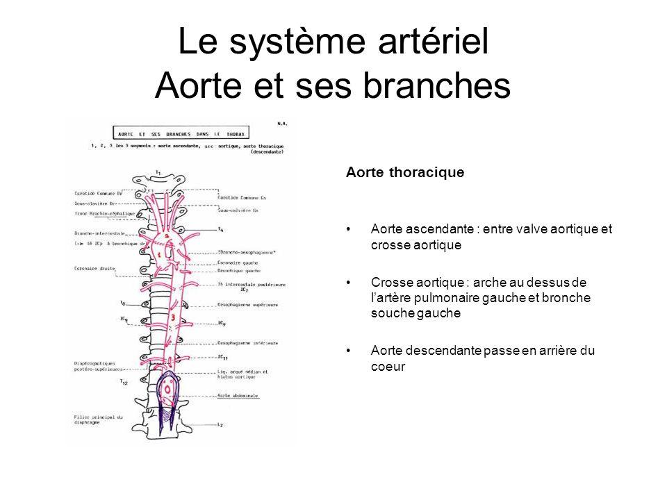 Le système artériel Aorte et ses branches