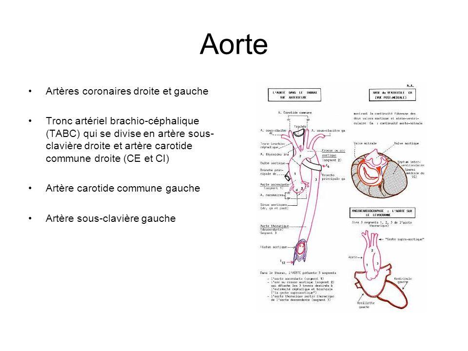Aorte Artères coronaires droite et gauche