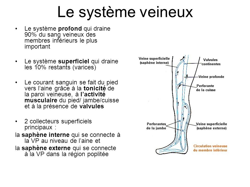 Le système veineux Le système profond qui draine 90% du sang veineux des membres inférieurs le plus important.