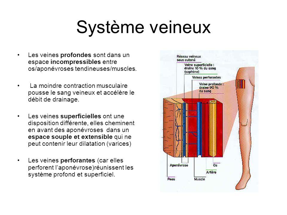 Système veineux Les veines profondes sont dans un espace incompressibles entre os/aponévroses tendineuses/muscles.