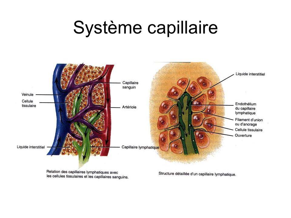 Système capillaire