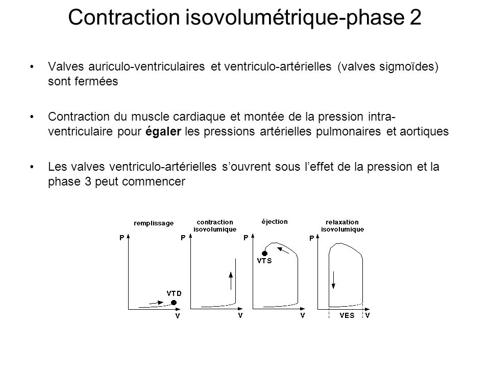 Contraction isovolumétrique-phase 2