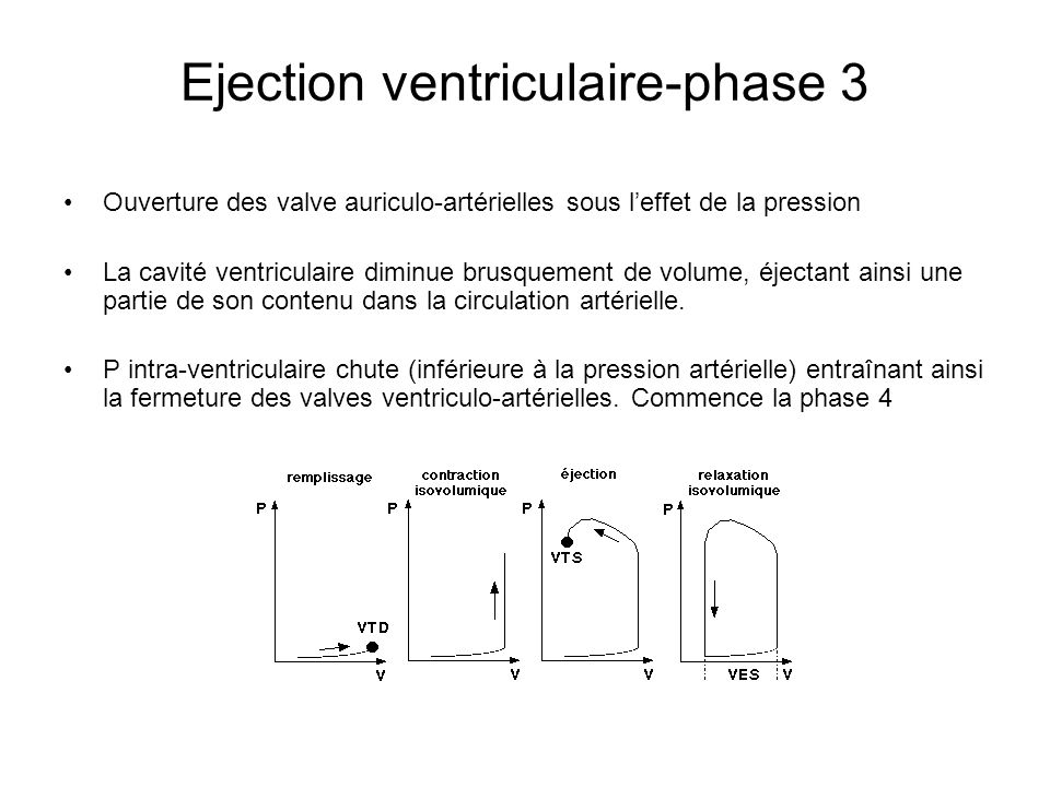 Ejection ventriculaire-phase 3