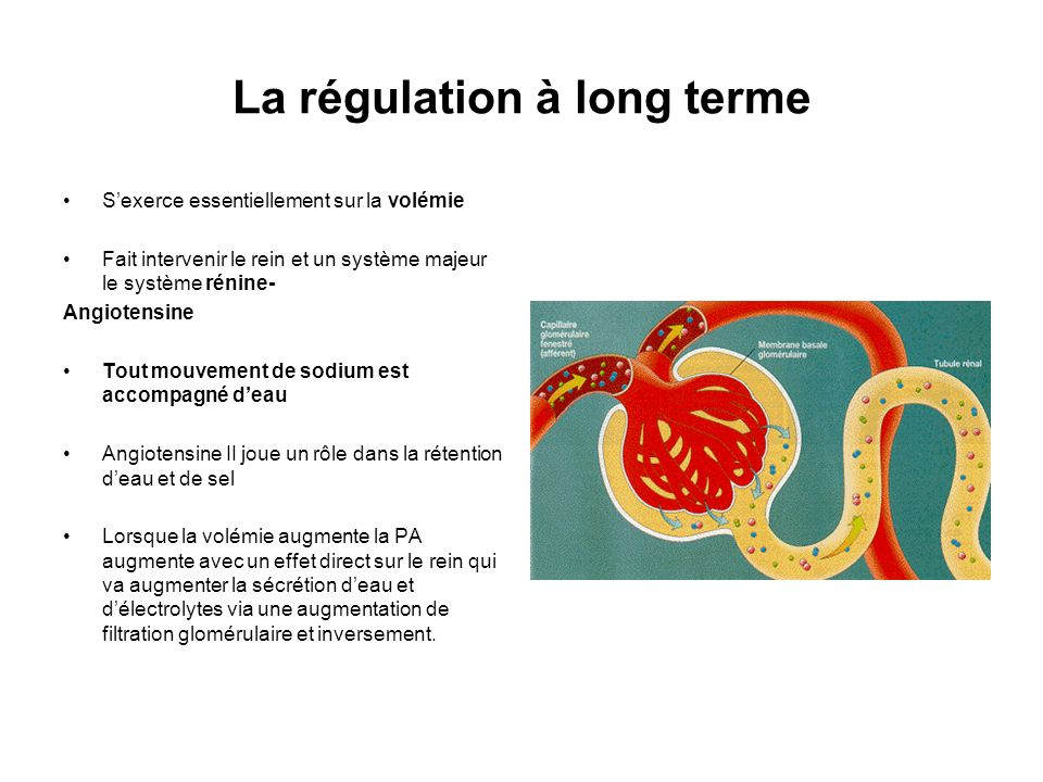 La régulation à long terme