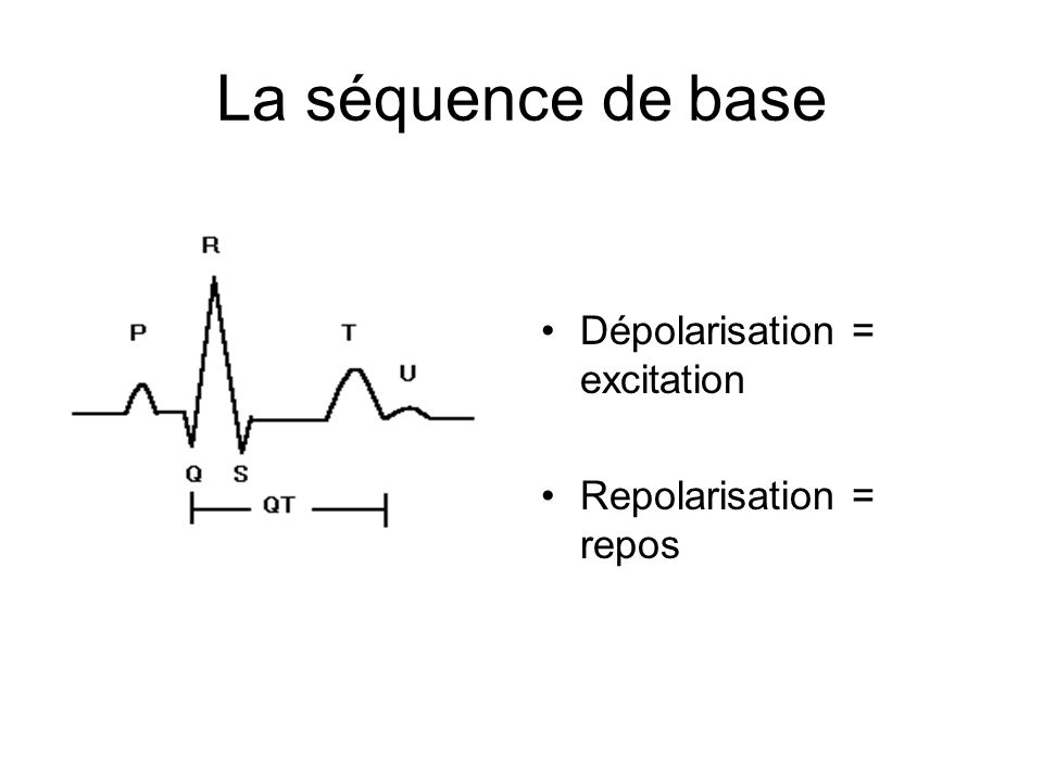 La séquence de base Dépolarisation = excitation Repolarisation = repos