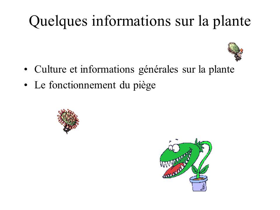 Quelques informations sur la plante