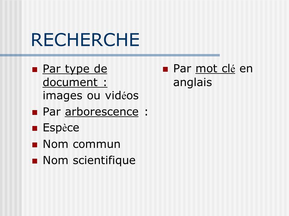 RECHERCHE Par type de document : images ou vidéos Par arborescence :