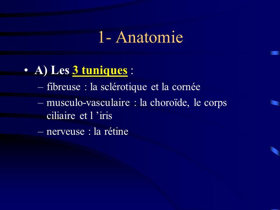 1- Anatomie A) Les 3 tuniques : fibreuse : la sclérotique et la cornée
