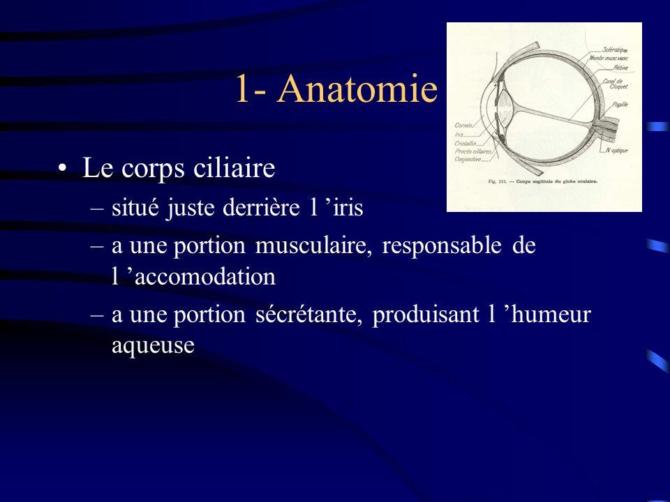 1- Anatomie Le corps ciliaire situé juste derrière l 'iris
