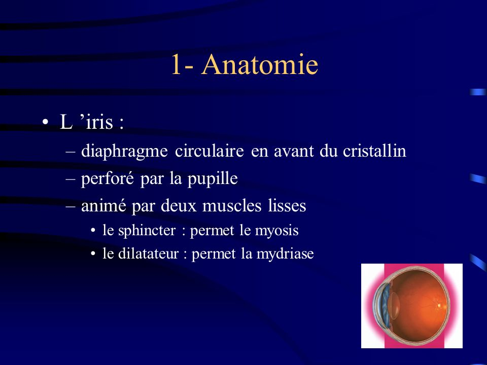 1- Anatomie L 'iris : diaphragme circulaire en avant du cristallin