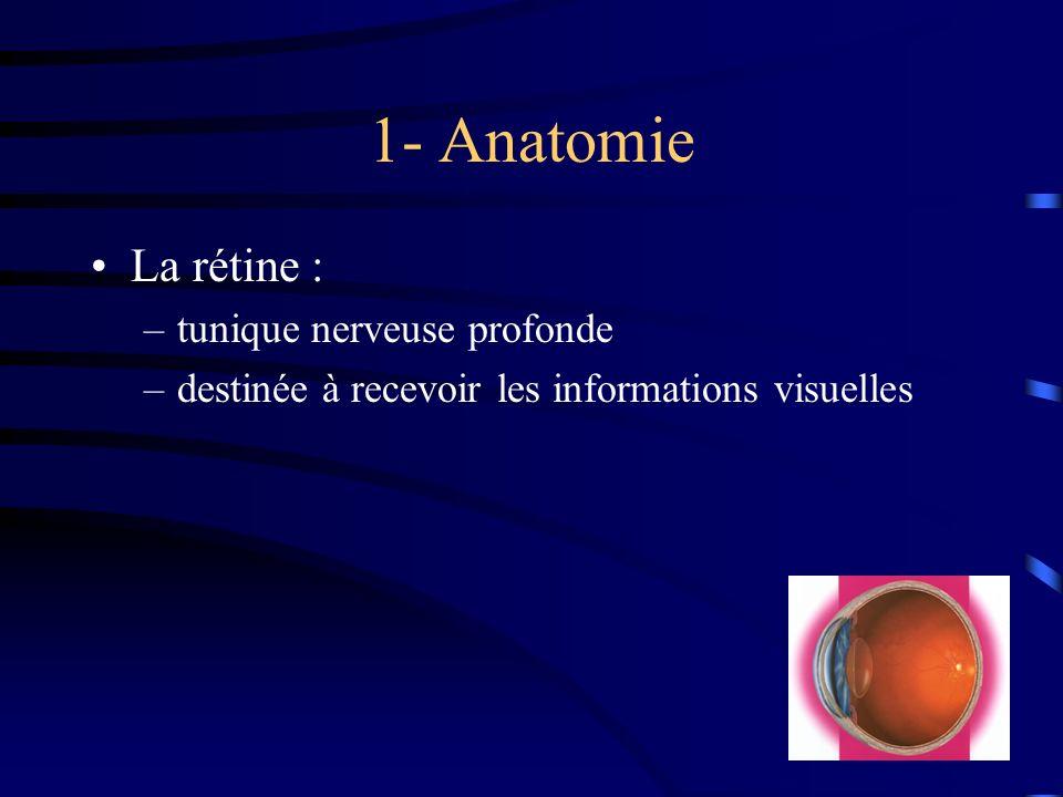 1- Anatomie La rétine : tunique nerveuse profonde