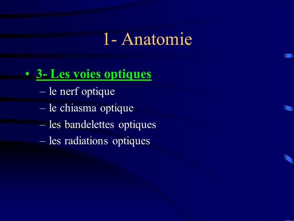1- Anatomie 3- Les voies optiques le nerf optique le chiasma optique