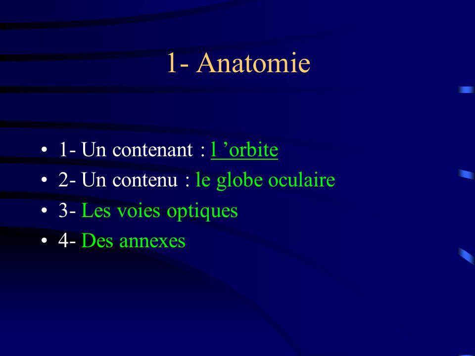 1- Anatomie 1- Un contenant : l 'orbite