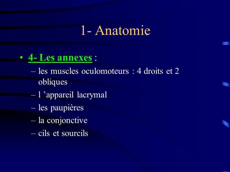1- Anatomie 4- Les annexes :
