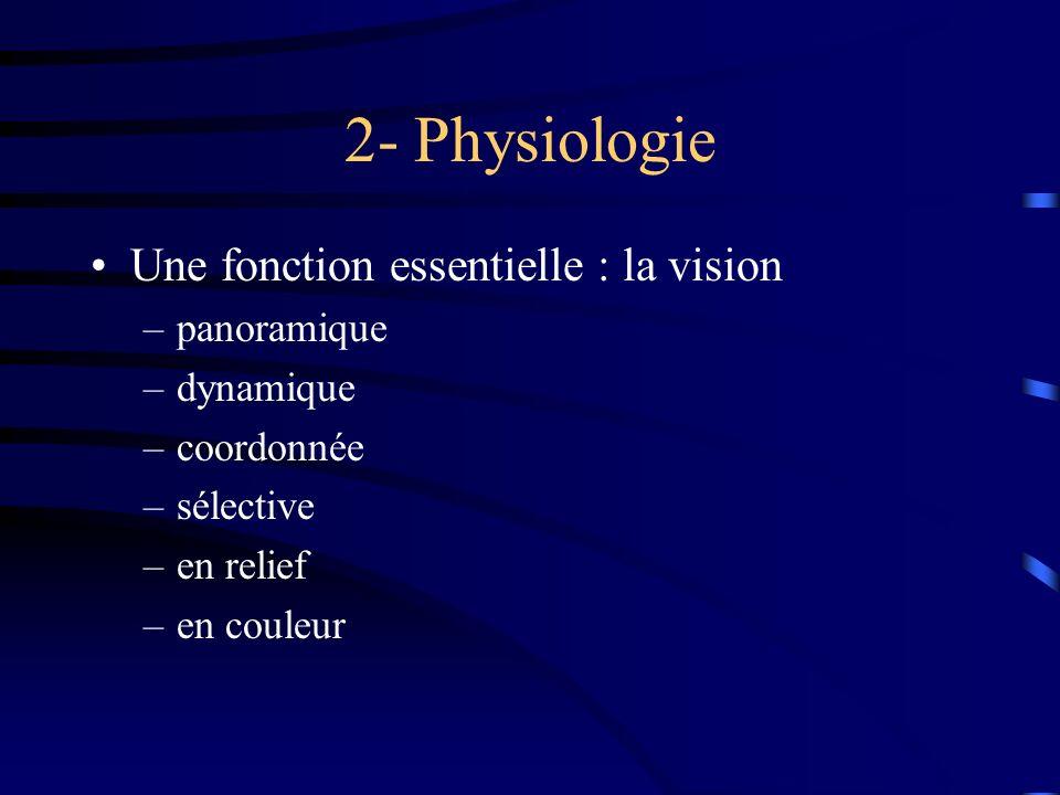 2- Physiologie Une fonction essentielle : la vision panoramique