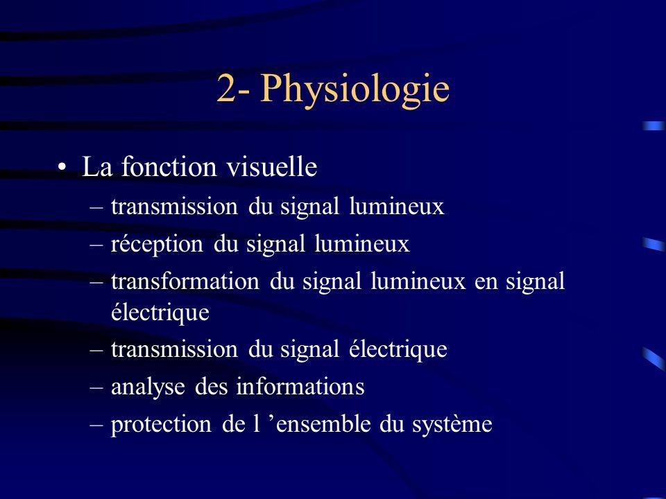 2- Physiologie La fonction visuelle transmission du signal lumineux