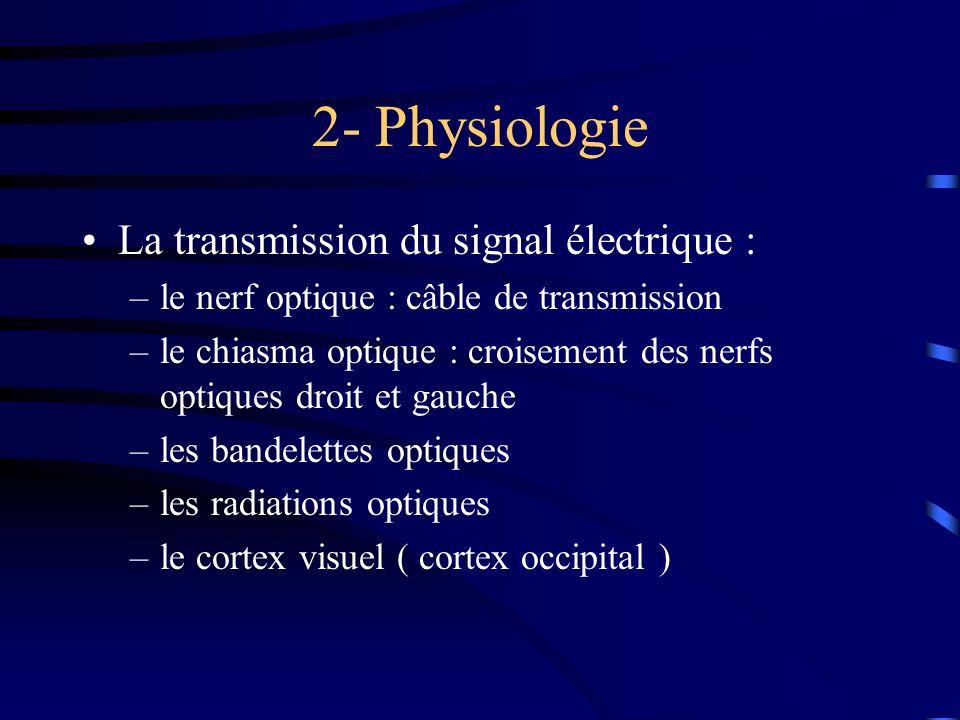 2- Physiologie La transmission du signal électrique :