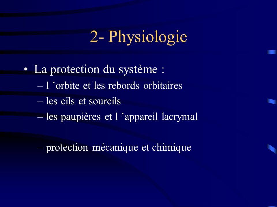 2- Physiologie La protection du système :