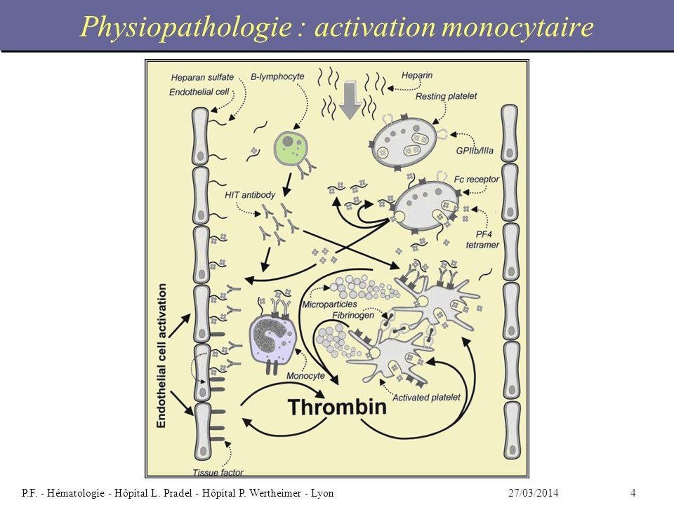 Physiopathologie : activation monocytaire