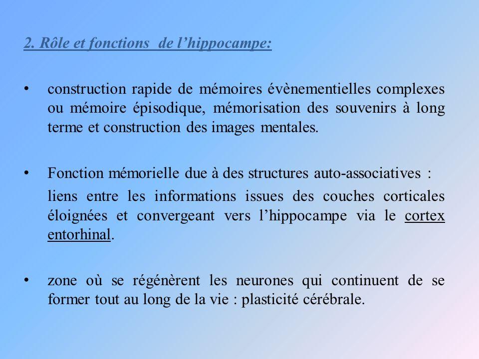 2. Rôle et fonctions de l'hippocampe: