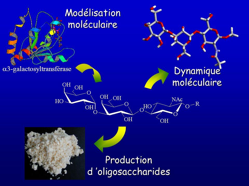 Modélisation moléculaire Dynamique moléculaire Production