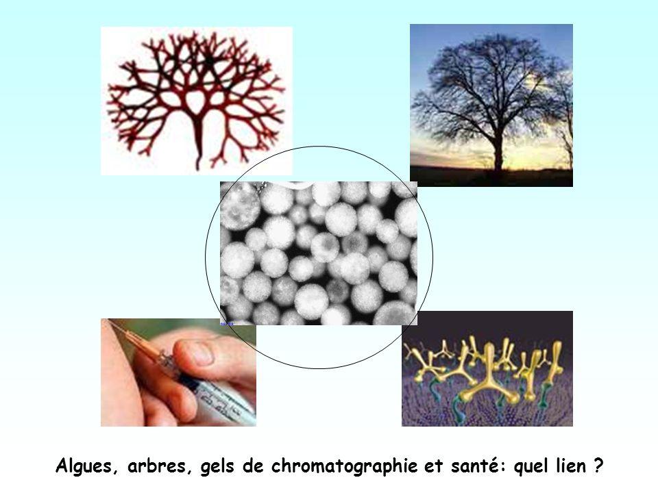 Algues, arbres, gels de chromatographie et santé: quel lien