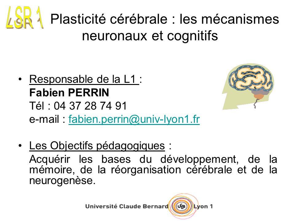 Plasticité cérébrale : les mécanismes neuronaux et cognitifs