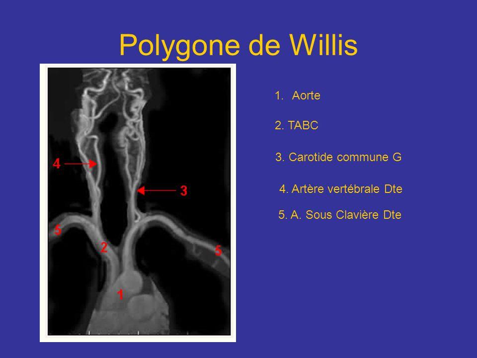 Polygone de Willis Aorte 2. TABC 3. Carotide commune G