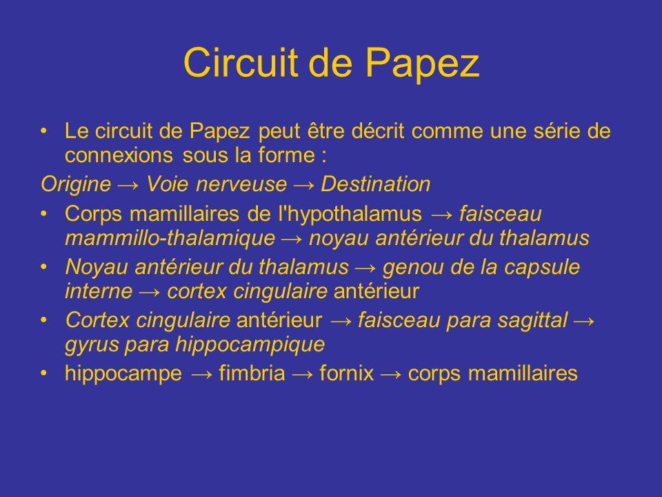 Circuit de Papez Le circuit de Papez peut être décrit comme une série de connexions sous la forme :