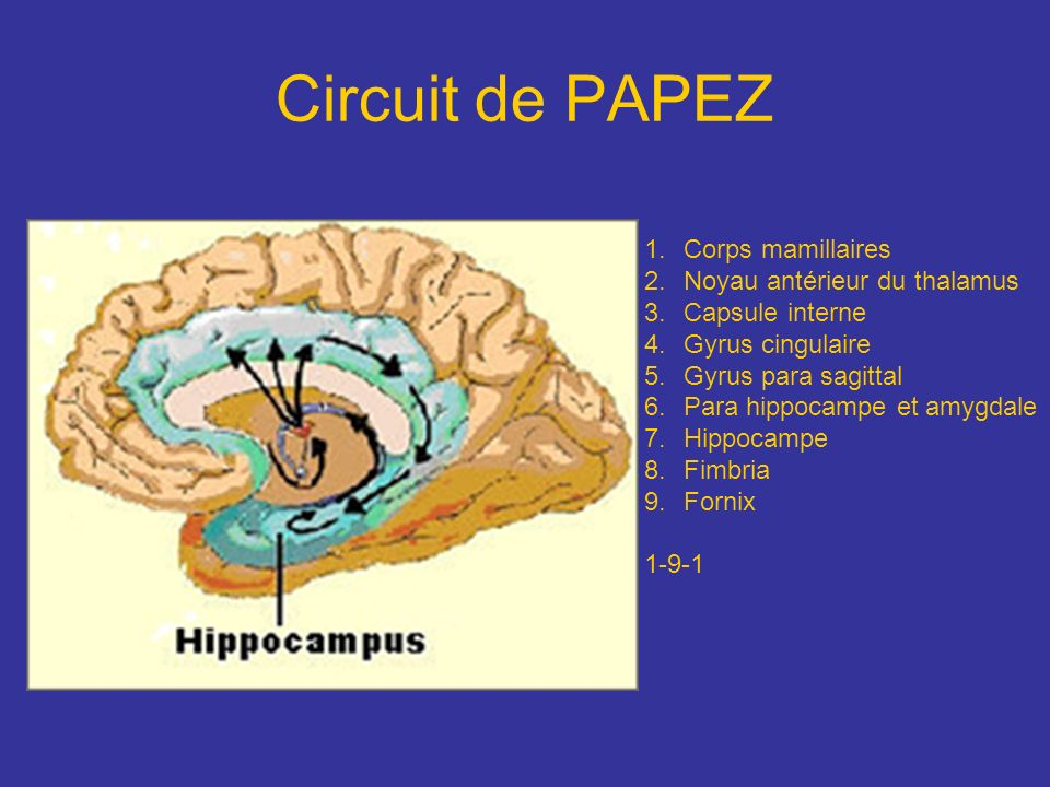 Circuit de PAPEZ Corps mamillaires Noyau antérieur du thalamus
