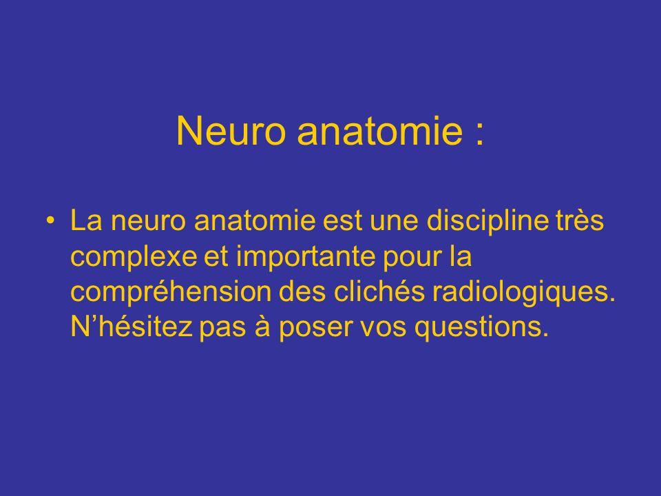Neuro anatomie :