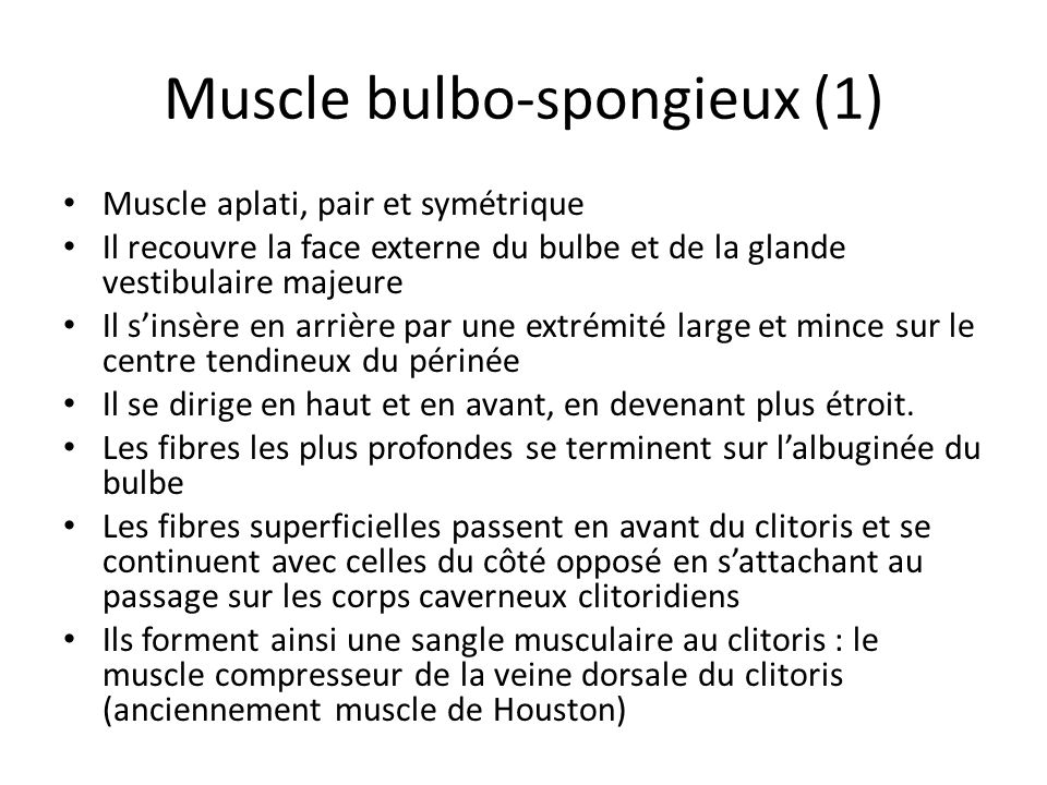 Muscle bulbo-spongieux (1)