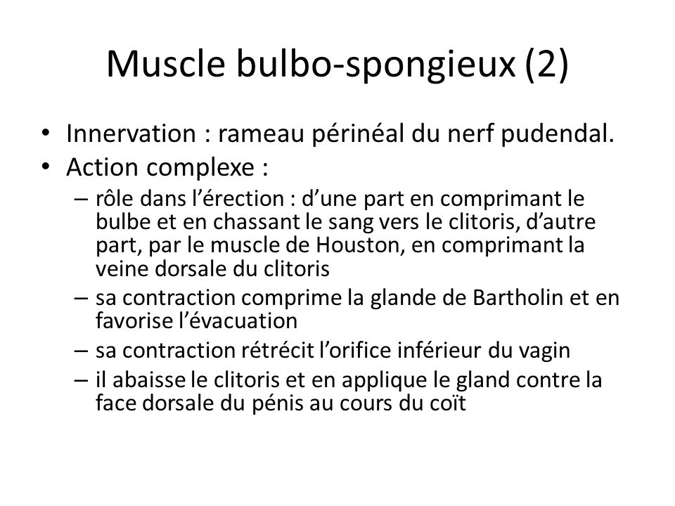 Muscle bulbo-spongieux (2)