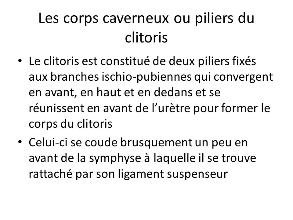 Les corps caverneux ou piliers du clitoris