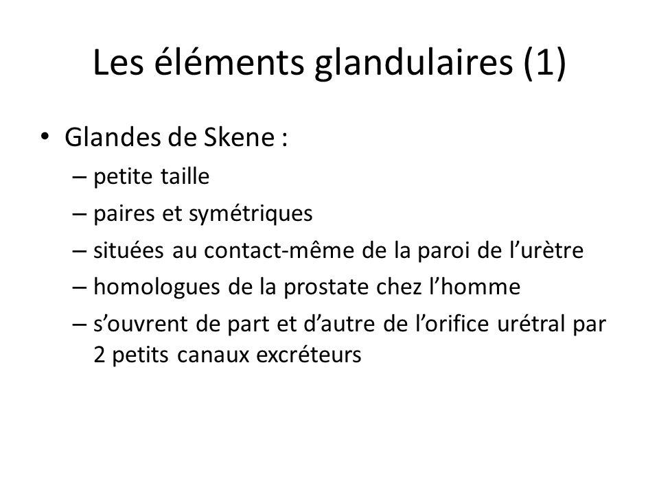 Les éléments glandulaires (1)