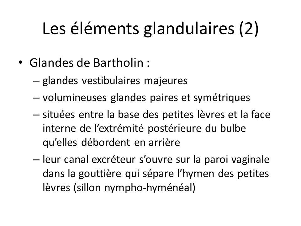 Les éléments glandulaires (2)
