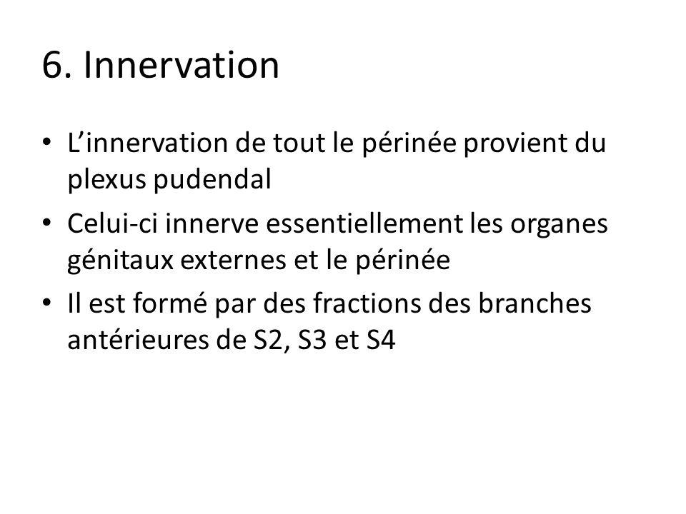 6. Innervation L'innervation de tout le périnée provient du plexus pudendal.