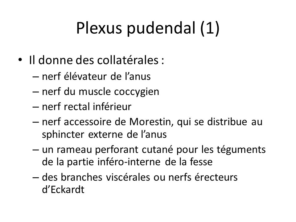 Plexus pudendal (1) Il donne des collatérales :
