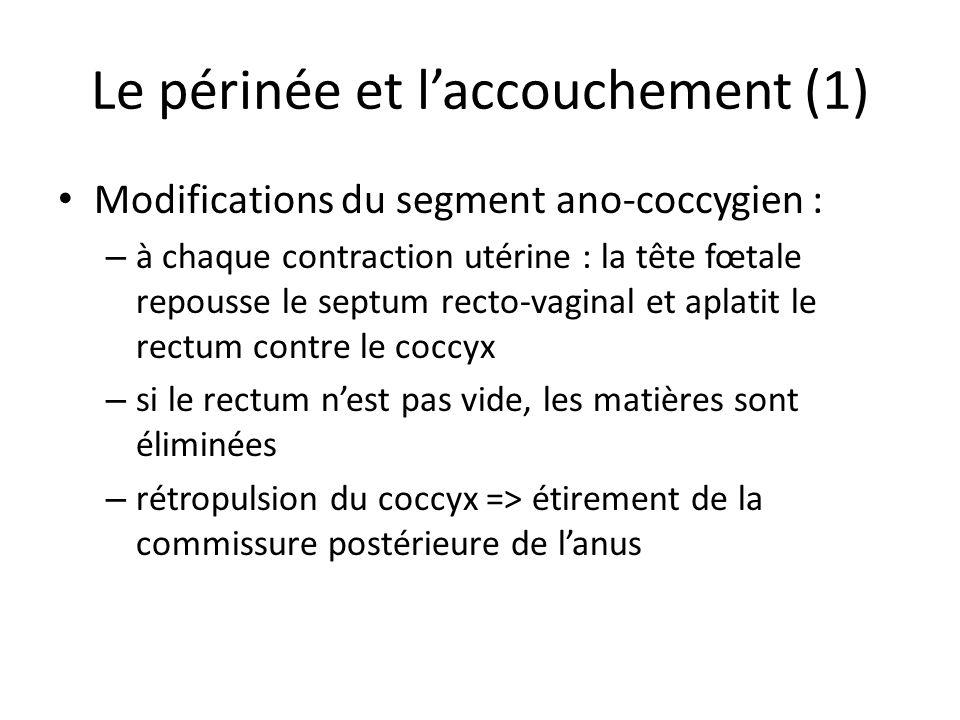 Le périnée et l'accouchement (1)