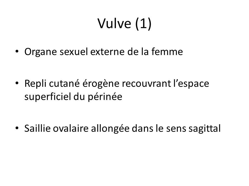 Vulve (1) Organe sexuel externe de la femme