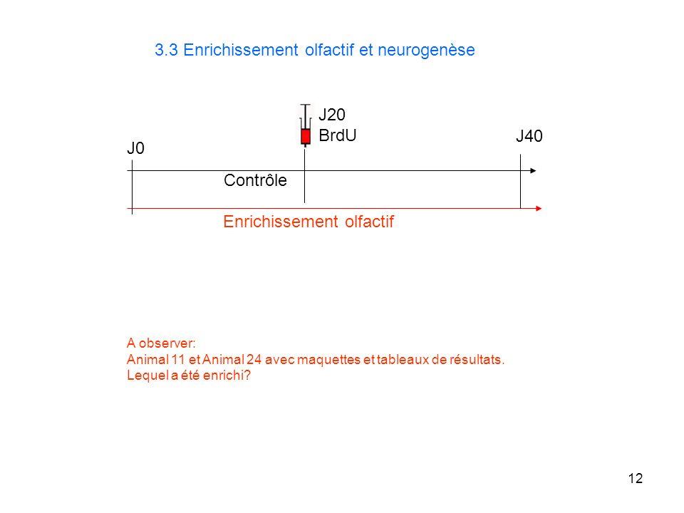 3.3 Enrichissement olfactif et neurogenèse
