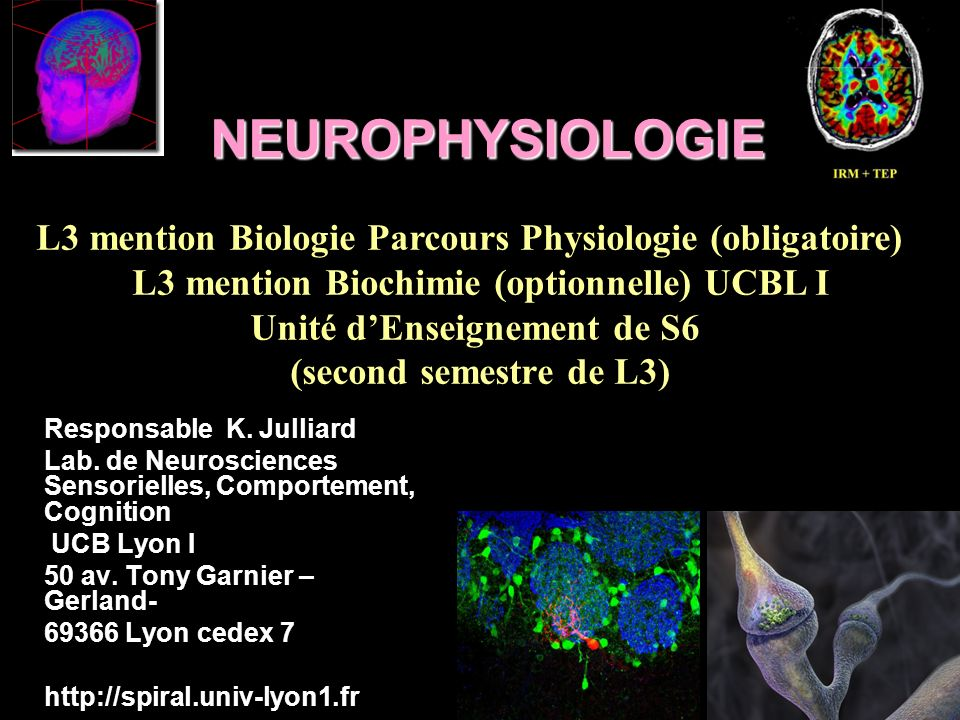 NEUROPHYSIOLOGIE L3 mention Biologie Parcours Physiologie (obligatoire) L3 mention Biochimie (optionnelle) UCBL I.