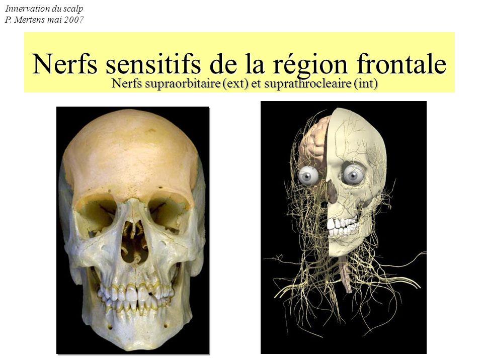 Nerfs sensitifs de la région frontale