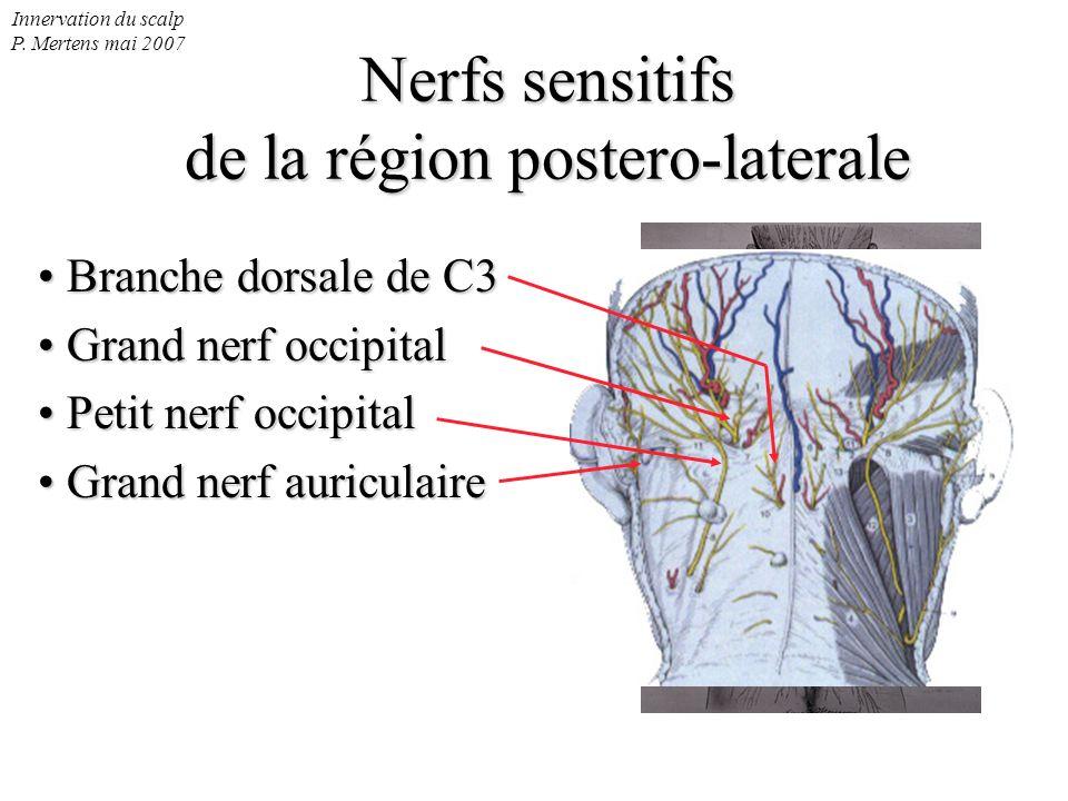Nerfs sensitifs de la région postero-laterale