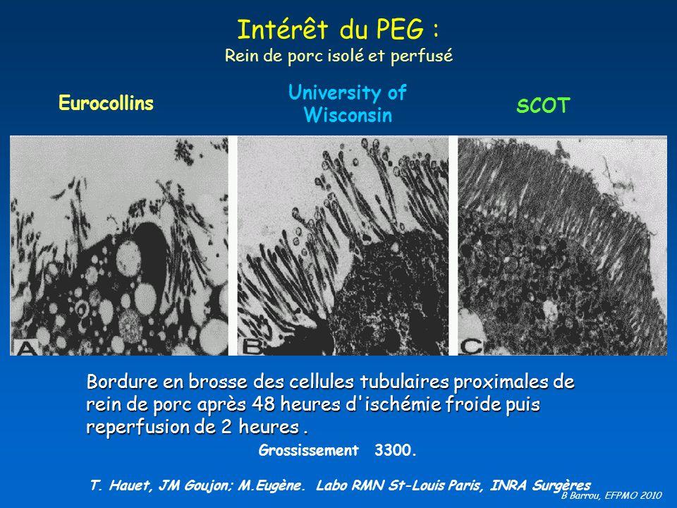 Intérêt du PEG : Rein de porc isolé et perfusé